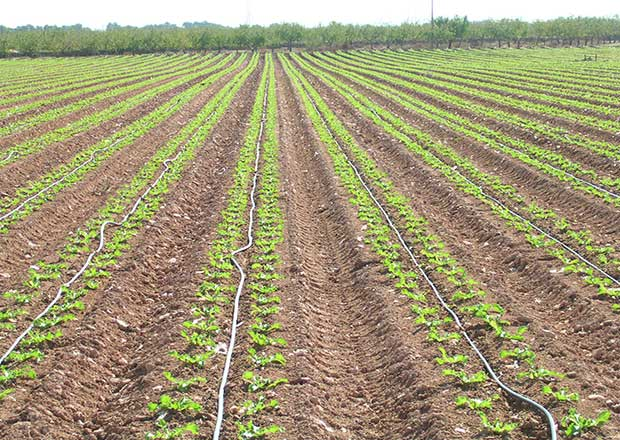 Agromasan sl instalaciones de riego fotos for Aspersores para riego de jardin